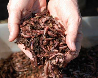 Worm farms and compost bins