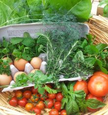 Growing Your Own Food - the basics