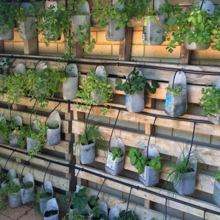 Vertical milk bottle garden - 2015 food theme